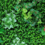 Artificial Green wall and Foliage