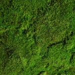 Preserved Green Wall with Flat Moss