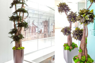 Preserved Trees and Plants